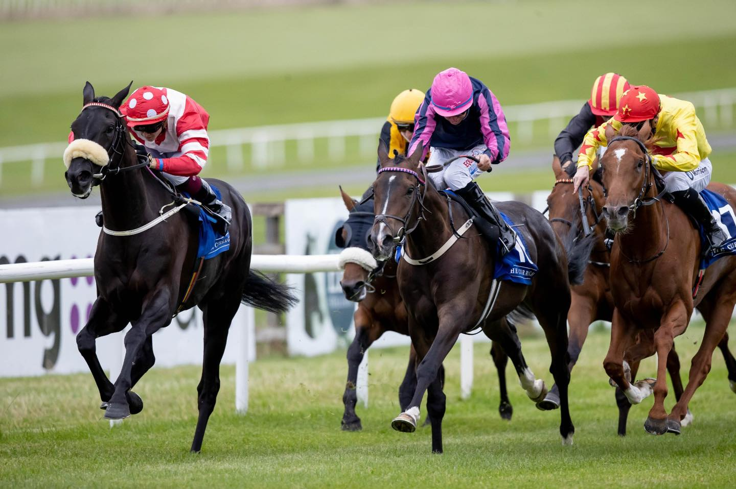 Irish Derby Festival Packages